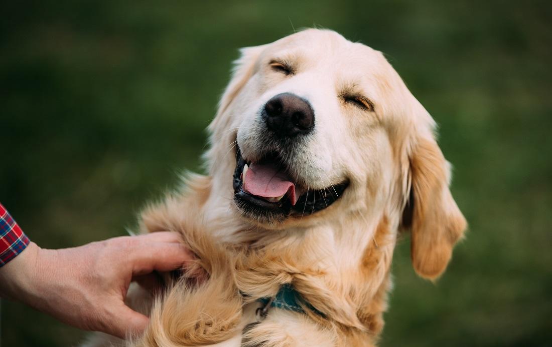hotel che accettano cani a bari